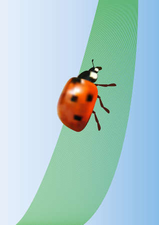 vector ladybird on the leaf Stock Vector - 11578553