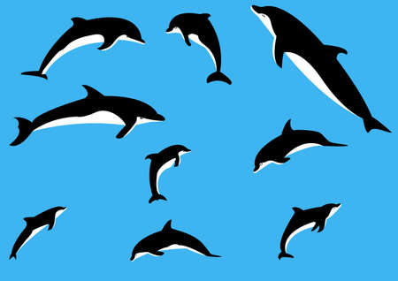 Vector dolphins in various poses Vector