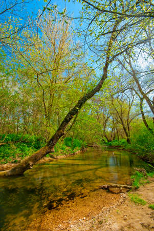 A warm spring day in a forest stream photo