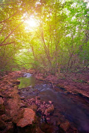 Mountain Forest River at sunset. The natural landscape photo
