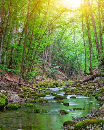 flowing river: Temprano en la ma�ana en las monta�as. Monta�a arroyo del bosque Foto de archivo