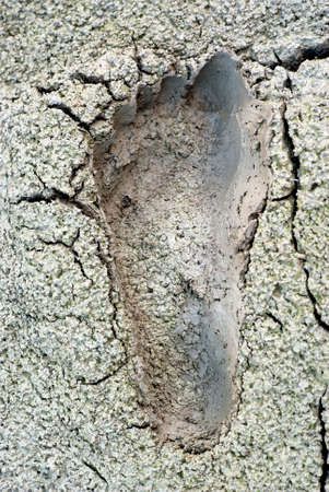 Imprint feet in the mud Stock Photo