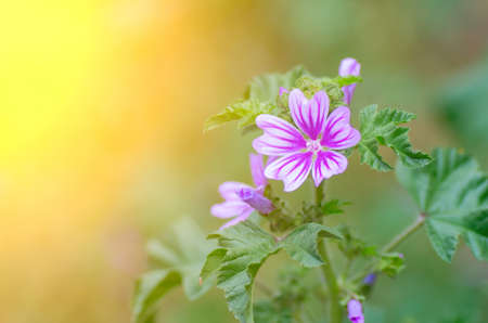 Beautiful purple flower and the suns rays. Natural composition photo