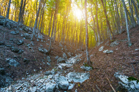 Magical forest on Mount Ai-Petri in Crimea at sunset. natural composition