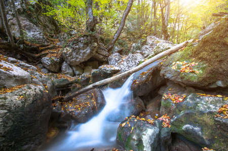 Beautiful river and fallen tree at the bottom of the canyon at sunset. Natural composition Stock Photo