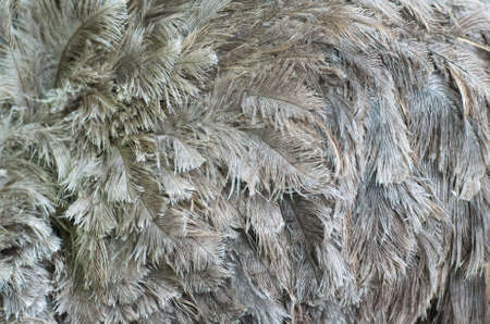 Ostrich feathers. Texture Composition