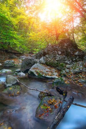 Mountain river with colorful leaves and logs autumn evening at sunset. Natural composition Zdjęcie Seryjne