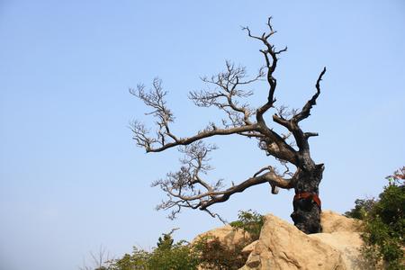 Burnt trees photo
