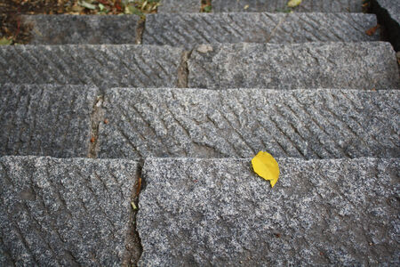 steps leaf photo