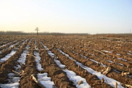 winter field photo