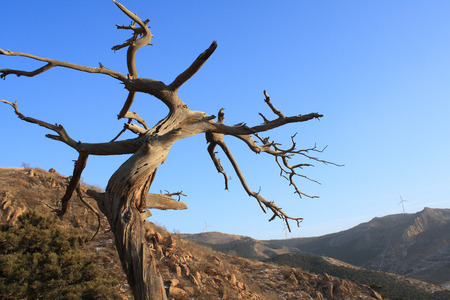 Burned tree photo