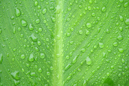 Droplets on a green leaf photo