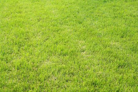 Lawn photo