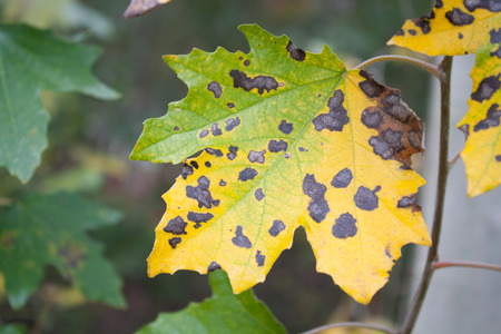 chewed: Leaf insect bites