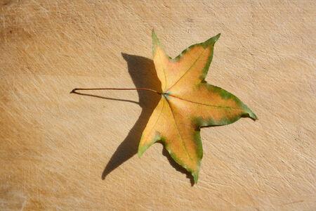 rundown: Maple Leaf