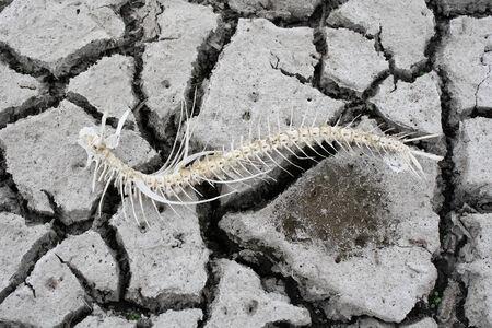 arid: Arid Stock Photo