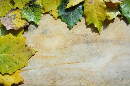rundown: Autumn leaves