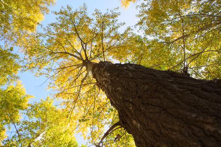 directly below: Tall tree