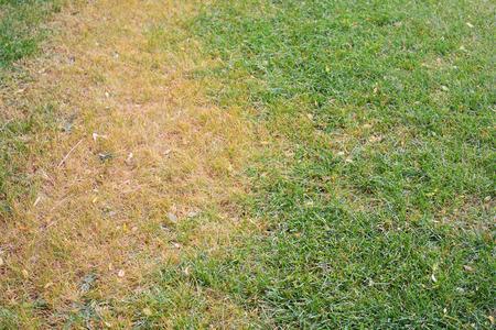 blade of grass: Dead Grass
