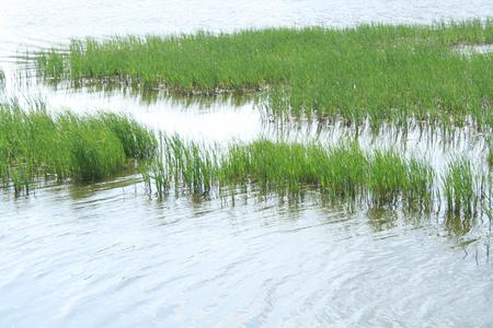 wetland: Wetland Stock Photo