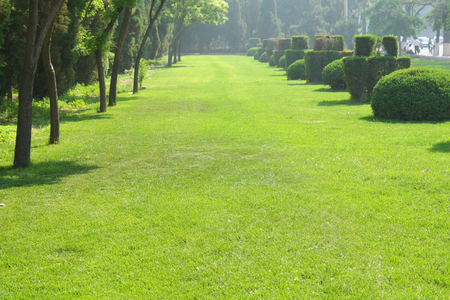 Green Garden landscape photo
