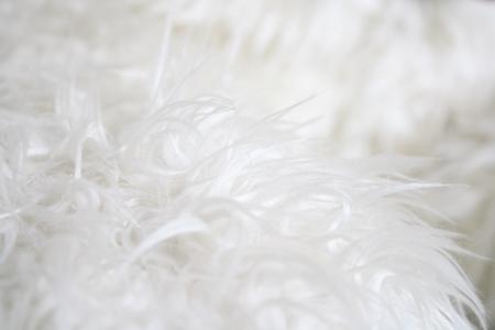 white fur: Piel blanca
