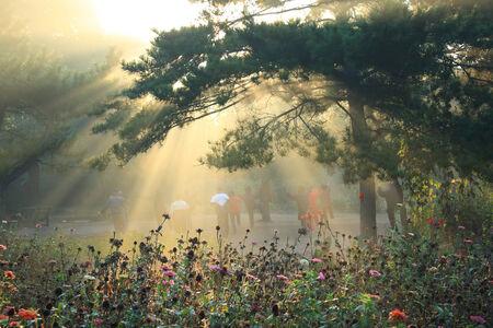 Morning sunlight falls on park