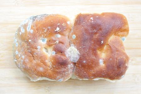 bread mold: mold on bread