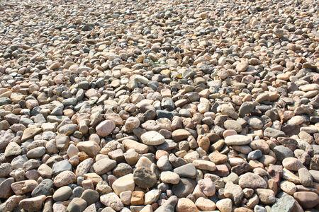 Brown Pebble photo