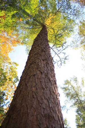 plant growth: Tall tree