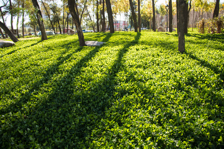 principled: Shadow of the tree in the grass Stock Photo