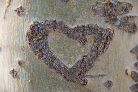 carved heart photo