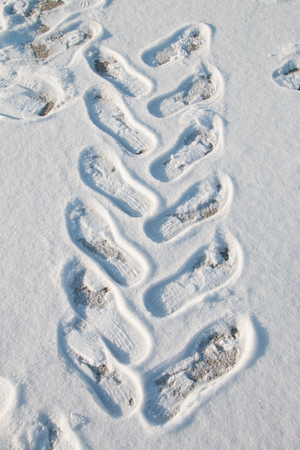 deep freeze: footprints in snow