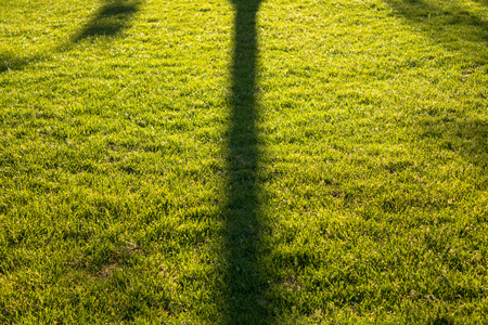 connectedness: Tree shadow on the lawn Stock Photo