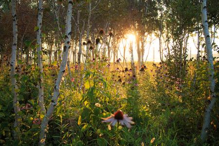 garden fresh: Autumn Park