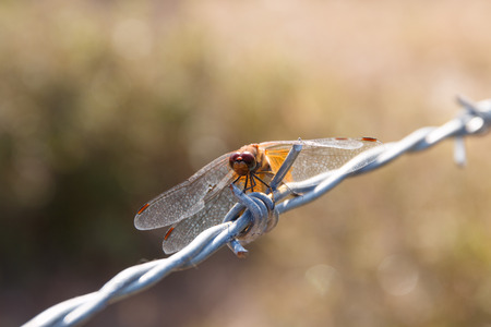 landed: Dragonfly landed on the wire