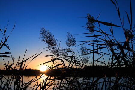 canne: Ance all'alba