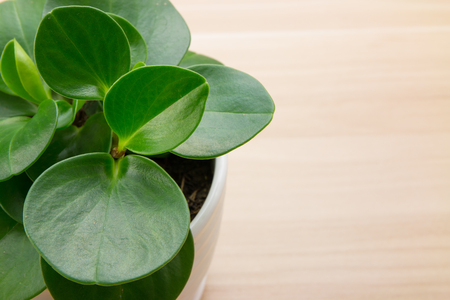 plant pots: Potted plants on wooden desk