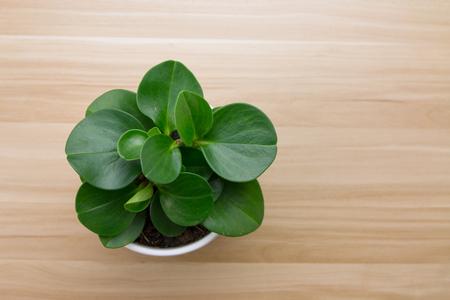 Potted plants on wooden desk Imagens - 47529166