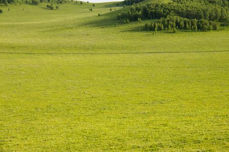grassland: China Inner Mongolia natural grassland