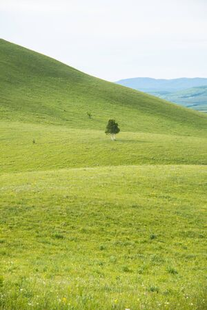 hilly: Tree on the hilly meadow