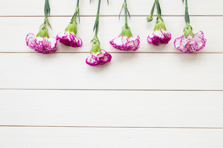 carnations: Pink carnations on wooden background