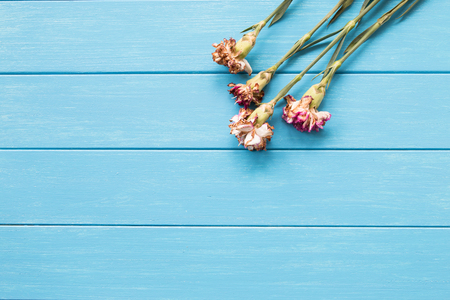wilted: Wilted carnations on the blue board Stock Photo