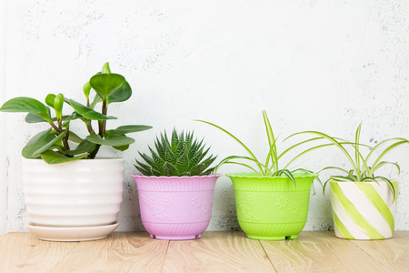 Potted plants on wood