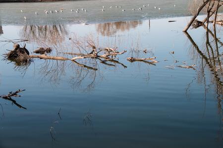 Die Bäume sind im Wasser untergetaucht Standard-Bild