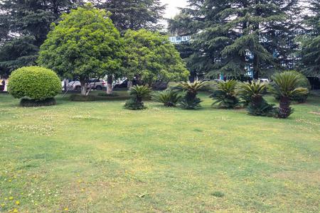 Lawn in the tropics