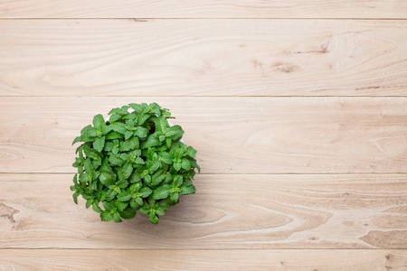 Potted mint on the table