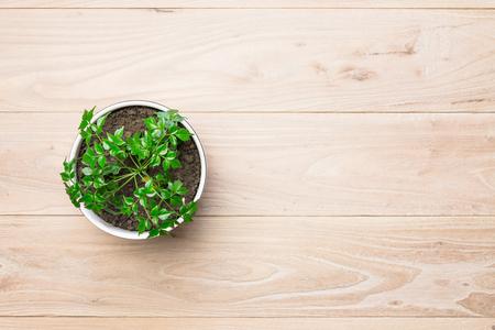 Potted plants on wooden desk