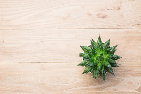 Potted aloe vera on the table Stock Photo
