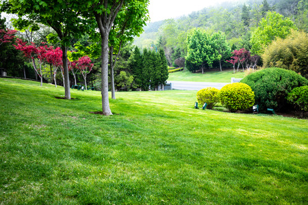 Lawn and trees in summer